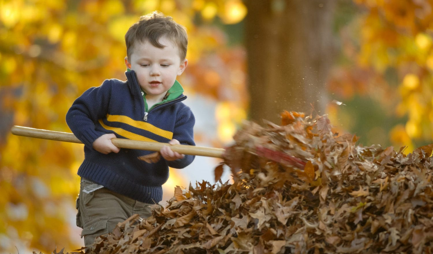 Young boy waking leaves in the fall - Stock Photo